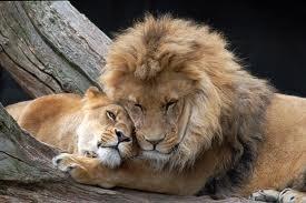da Animals in love