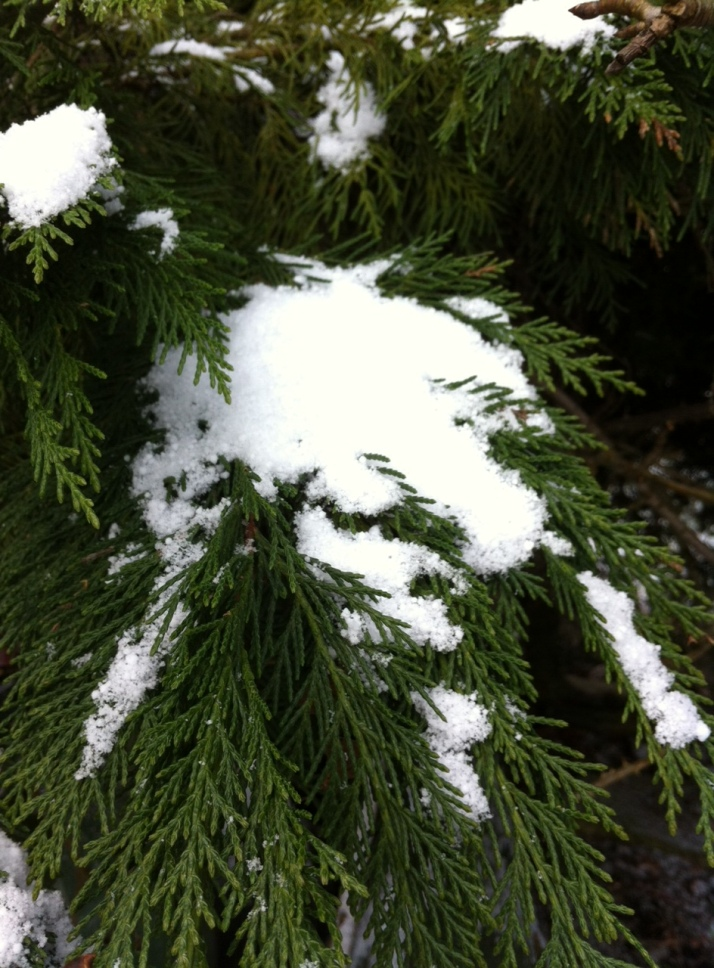 abete con neve2