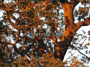 albero luce