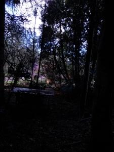 boschetto buio