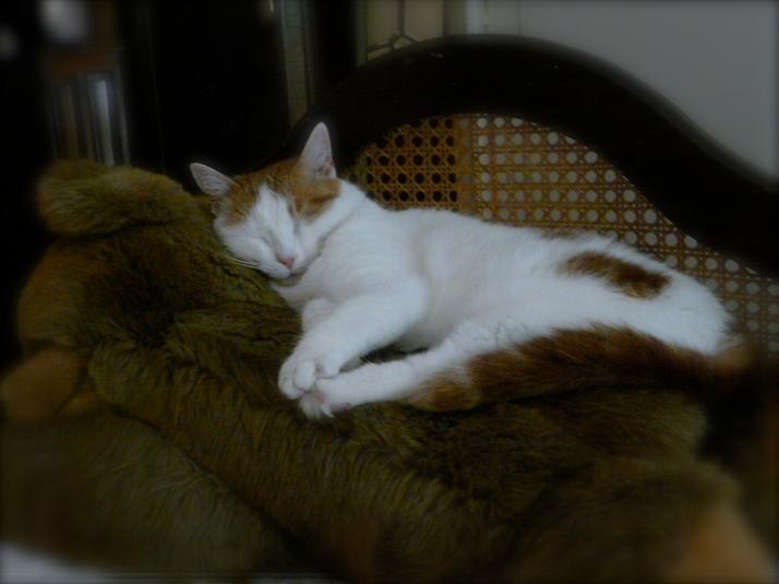 Patrizia Cavalli - Un gatto che dorme...