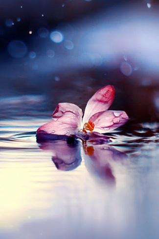 fiore acqua