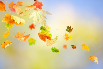 foglie vento