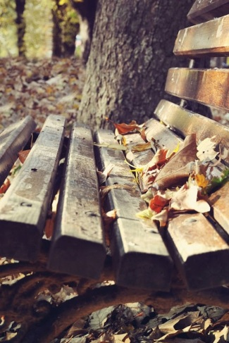 panchina foglie