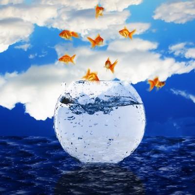 Infinito in ascolto del cuore for Quanto vivono i pesci rossi