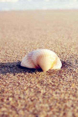 conchiglia sabbia