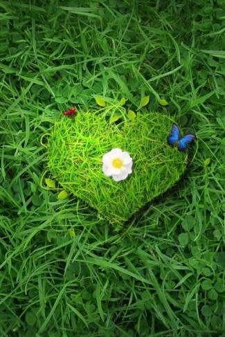 erba cuore