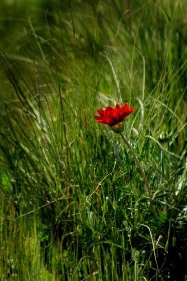fiore solitario