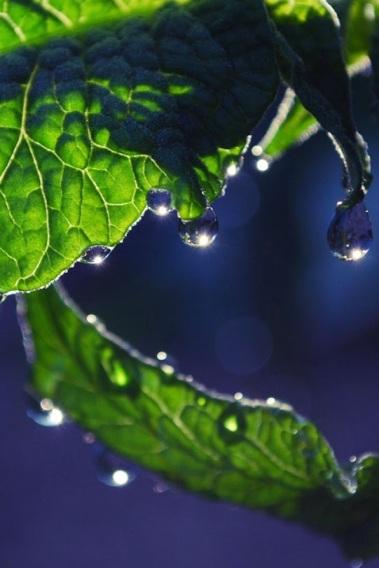 foglie con pioggia