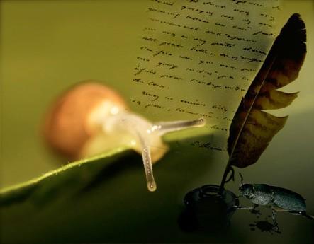 lumachina scarabeo