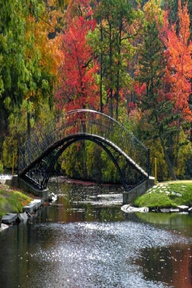 paesaggio fiume alberi