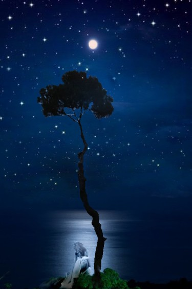 pino stelle