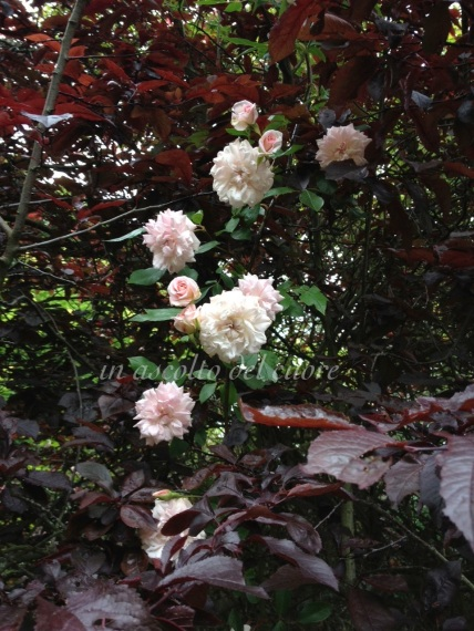 rose tra alberi