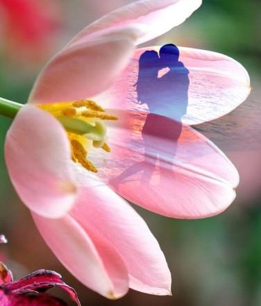 fiore amore