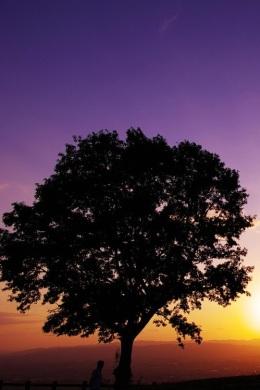albero solo