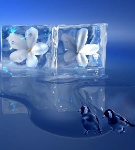 blocchi ghiaccio