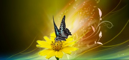 farfalla fiore