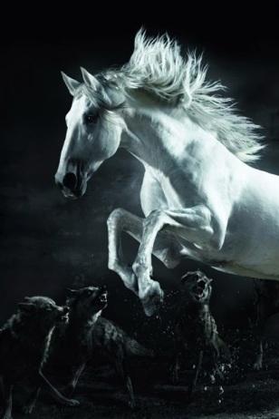 cavallo lupi