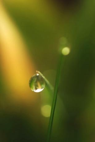 filo erba