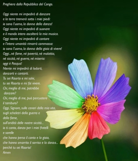 fiore petali colorati