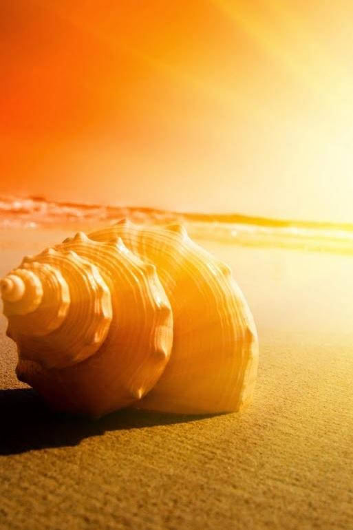 conchiglia spiaggia