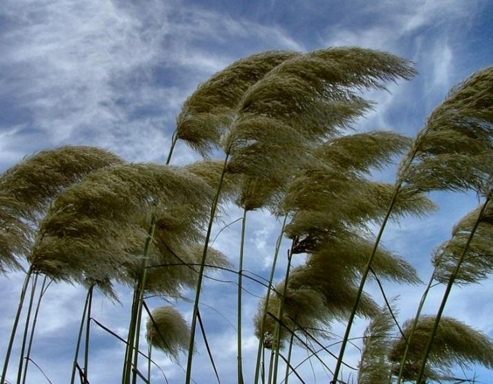 vento