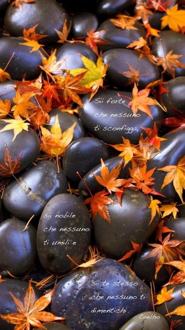foglie e sassi