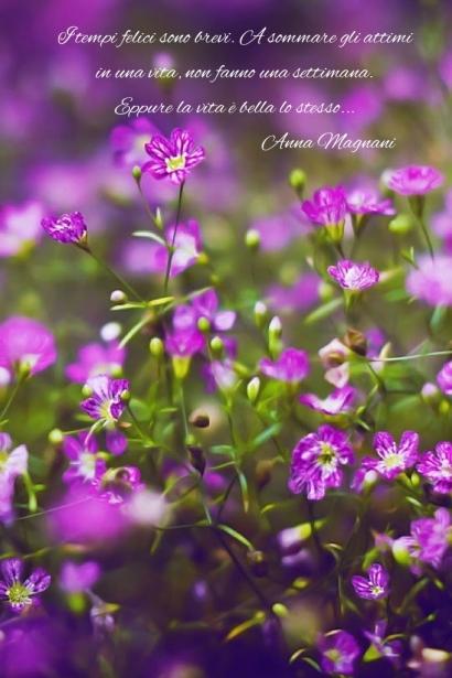 fiori-lilla